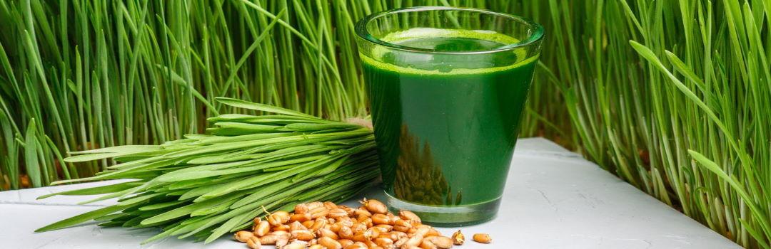 Сок из пшеницы витграсс: как принимать
