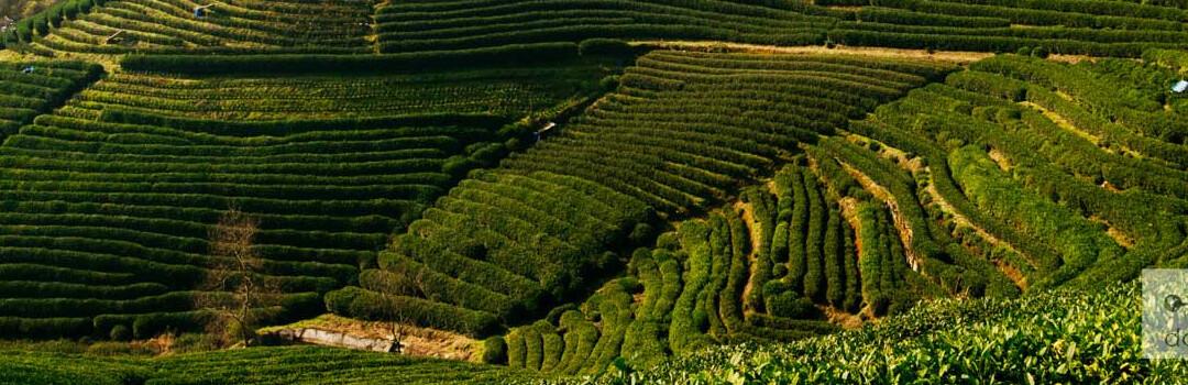 5 видов чая с натуральными целебными свойствами
