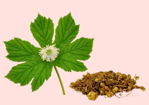 Растение гидрастис